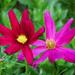 Two little flowers