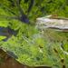 Milkweed by k9photo
