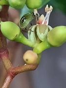 2nd Aug 2021 - Bugs