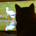animals documentaries are his fav