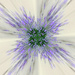 Abstract 4 - Plants by shutterbug49