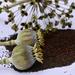 Seed by tonygig