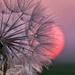 smokey sunsets