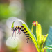 Caterpillar Ballet by kvphoto