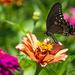 Summer Glory by cwbill
