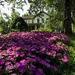Through the Flowers to the Mansion by granagringa