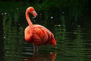 30th Jul 2021 - Flamingo Friday Once Again