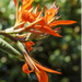 Sunlit Canna Lily by k9photo