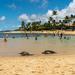 Paradise on Poipu Beach, Kauai