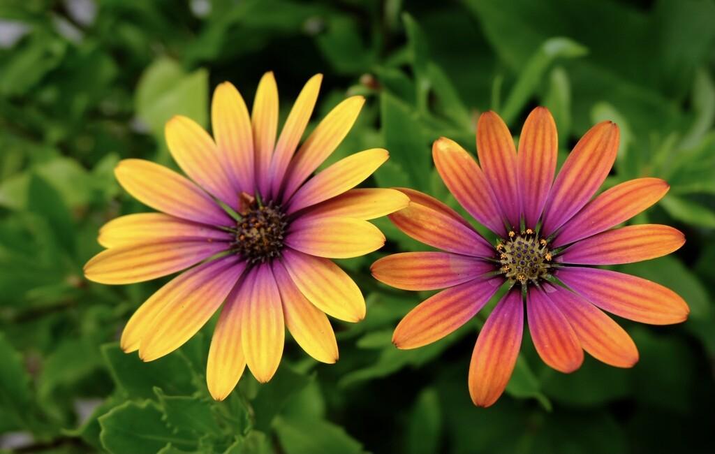 Flowers in a friends garden by yoland