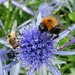 Hoverfly and Carder bee by julienne1