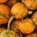 Pumpkins by joansmor