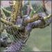 My first spiderweb by ludwigsdiana