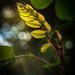 Catching the light  by haskar