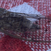 hello sweet cicadoidea (: