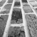 Brick texture in B&W