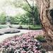 The Dallas Arboretum in springtime by louannwarren