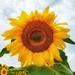 Sunny 2 by edorreandresen