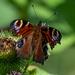 It's a butterfly by stevejacob