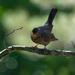Common Bird  by yaorenliu