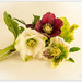 Winter Rose by julzmaioro