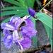 Iris by ubobohobo
