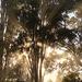 pattern of morning light by koalagardens