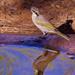 Sitting At The Waterhole_8091362 by merrelyn