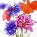 Meadow Flowers by carole_sandford
