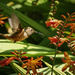 Beak Open Ready for Nectar  by jgpittenger