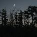 Crescent Moon over Port Hadlock