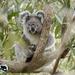 BELA by koalagardens