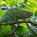 Scenes from the zoo - a beady-eyed tree hugger by laroque
