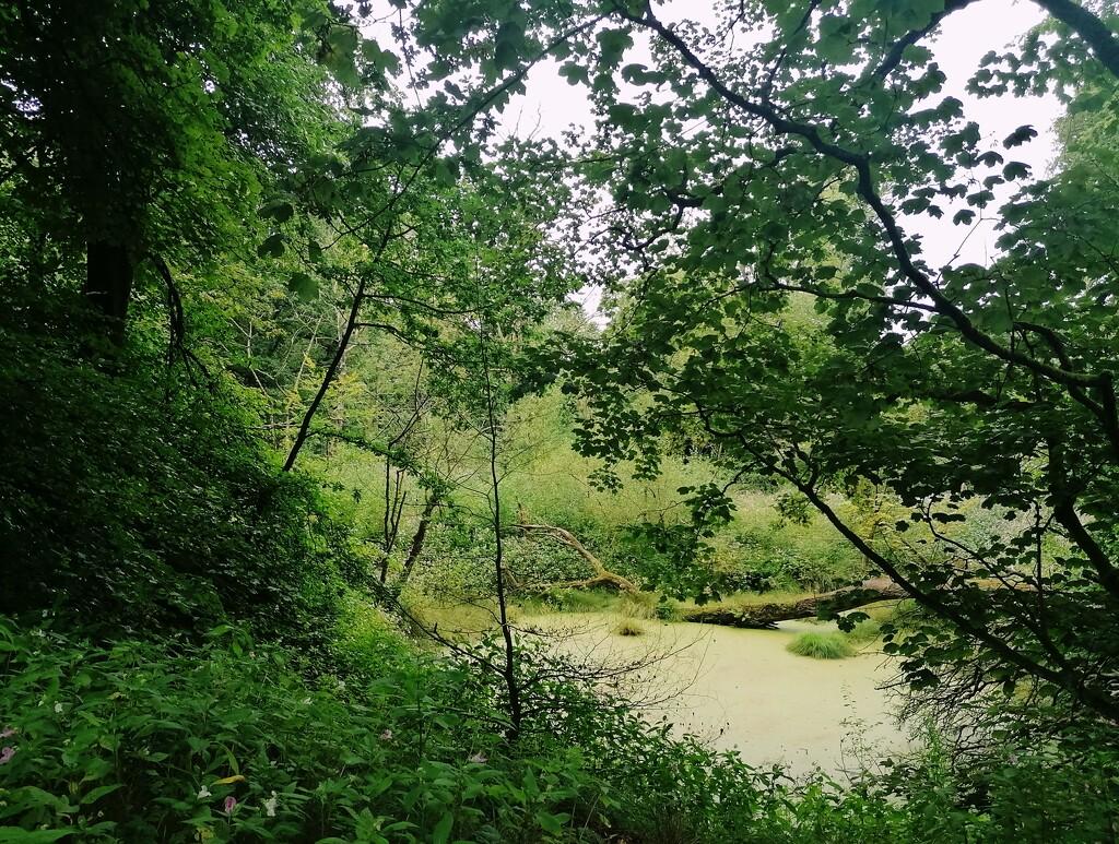 Woodland  by chesney_7