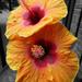 Outside Flower Power by linnypinny