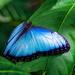 Blue! by photographycrazy