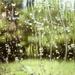 Rainy bubbles