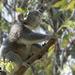 morning yoga by koalagardens