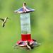 So many hummingbirds!