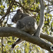 kickin back by koalagardens
