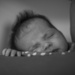 Sleeping, eating...pretty much it! by jackies365