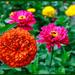 Friend's Flowers by hjbenson