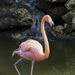 Flamingo Waterfall by kvphoto