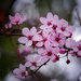 Spring is coming by maureenpp