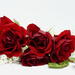 Love is like a red, red rose!