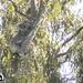 TGIF by koalagardens
