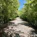 the frisco greenway trail #2