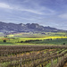 Winter in the Winelands by ludwigsdiana