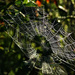 Spiders are Hiding Further Back by milaniet