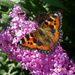 Flutter   Of Butterflies. by wendyfrost